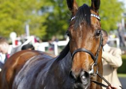 Betfred Cesarewitch Trial Day