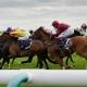 Horses Newmarket