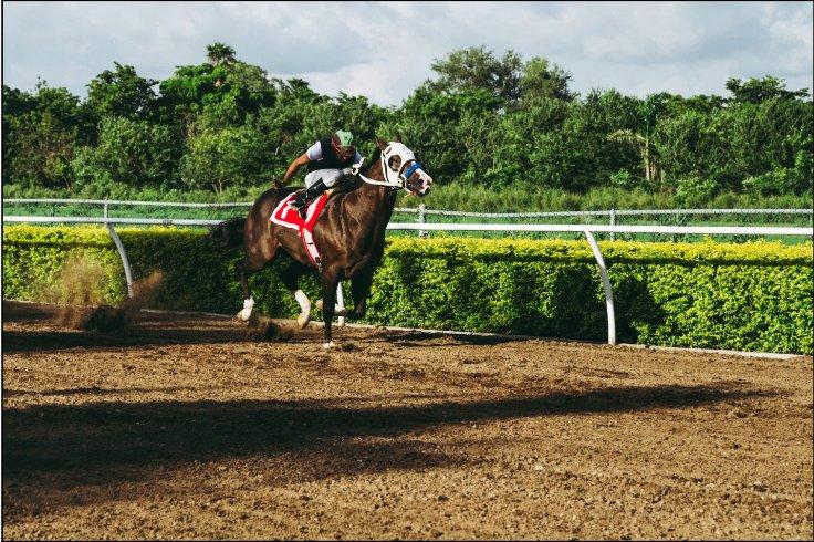Newmarket Racing